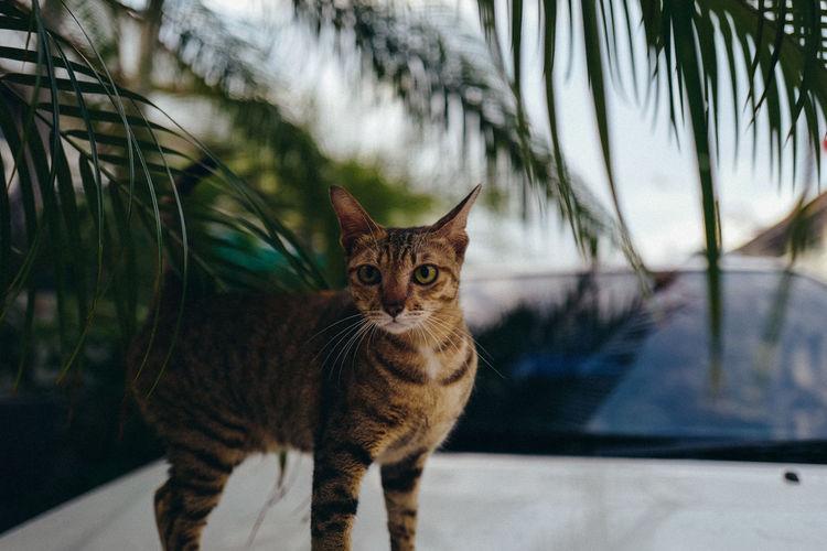 #cat Pets
