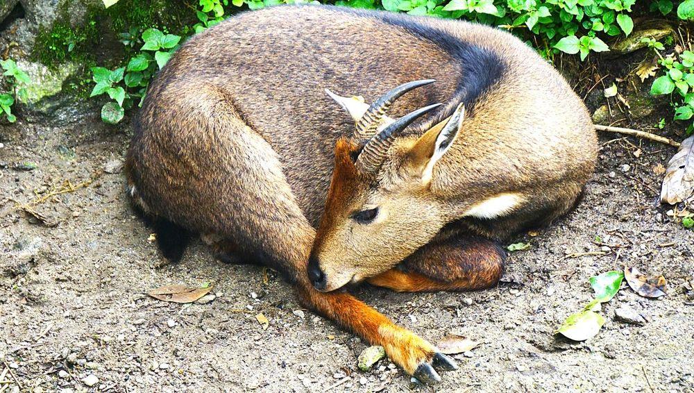 Travel Sony A6000 SonyAlpha6000 India. Wildlife Wildlifephotography Wildlife Photography Deers Himalayas, India The Week On Eyem India
