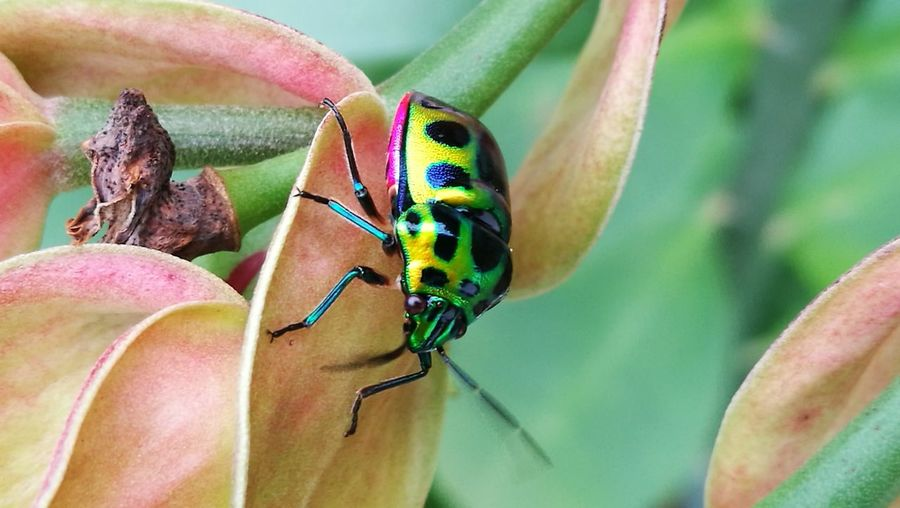 Bug Insect Animals In The Wild Animal Wildlife Animal Themes Nature One Animal Leaf Outdoors Close-up Day Beauty In Nature Plant No People Perching