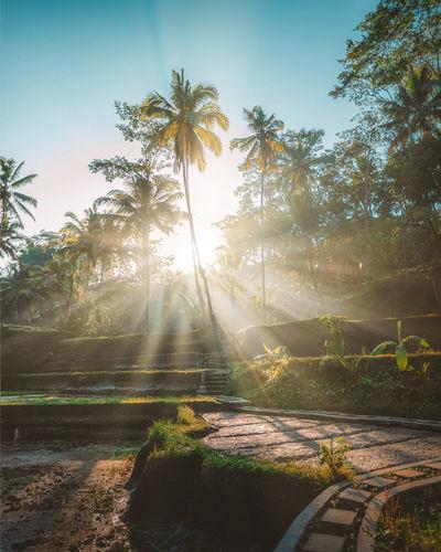 Sunlight falling on palm trees against sky