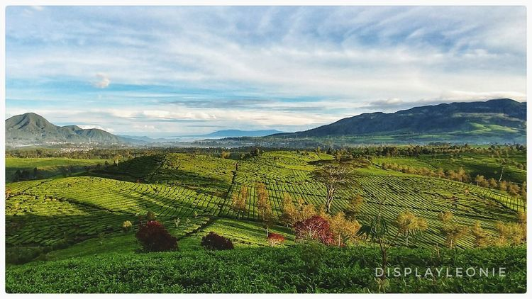 morning view, Mt Malabar -West Java. Tea Plantation  Bns_ladies Landscape_photography Ig_bliss Agriculture Field Rural Scene Cloud - Sky