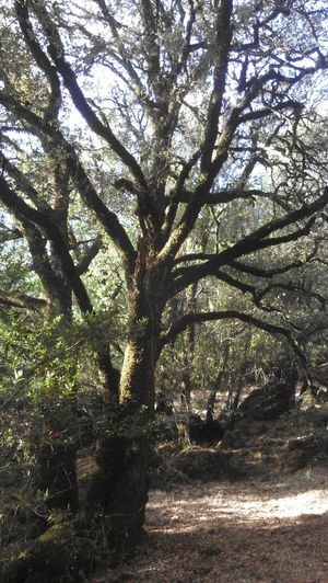 love this spot. Mountain Biking TreePorn Tree