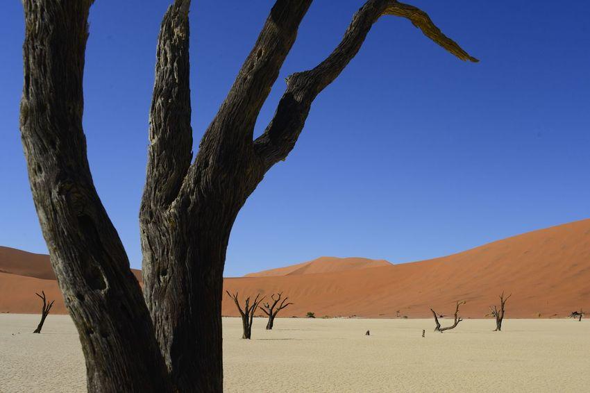 Dead Vlei, Sossusvlei, Namib Desert, Namibia Bucketlist Dead Tree Desert Namib Desert Namibia Nature Nature Photography Sossusvlei Tourist Attraction  Arid Climate Beauty In Nature Day Dead Vlei Desert Deserted Empty Landscape Namib Nature Outdoors Sand Sand Dune Sandy Tourist Destination Valley
