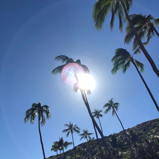 Beach Time Beach View Vacation Sunny Sunny Day Holiday Palm Tree Tree Low Angle View Sun No People Clear Sky Nature Sunlight Outdoors Day Palm Frond Blue Beauty In Nature