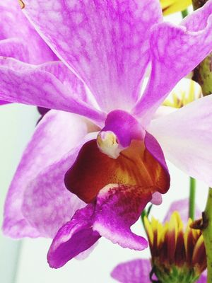 Flowers Orchids Purple Flower IPhoneography IPhone