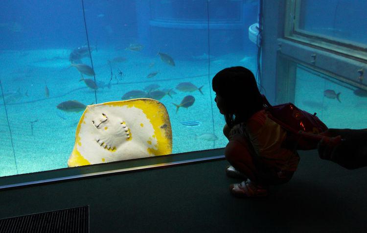Rays Fish Fun Animals In Captivity Aquarium Fish Water Fish Tank