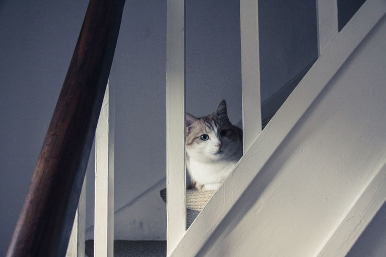 Railing Stairs Animal Themes Banisters Cat Close-up Day Domestic Animals Domestic Cat Feline Indoors  Looking At Camera Mammal No People One Animal Pets Portrait Red Cat Tomcat