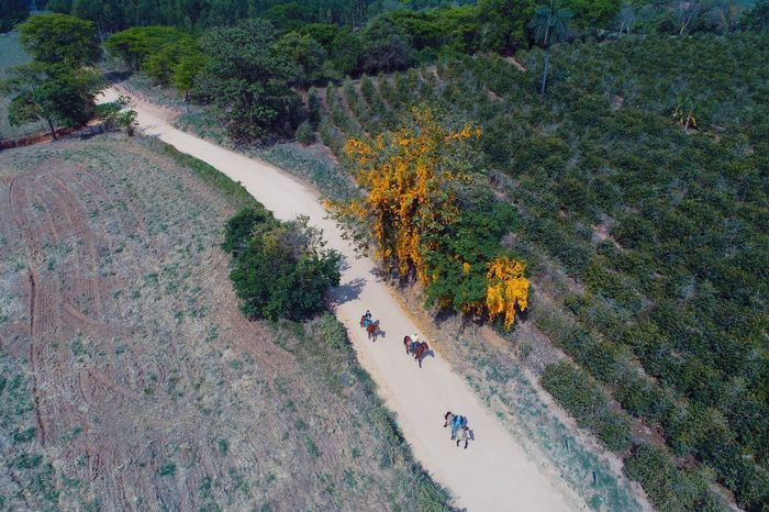 Bela cena de cavaleiros Rural Scene Rural Aerial Shot Dronephotography Horse High Angle View Aerial View Tree Outdoors Day Real People Nature Sport Scenics Beauty In Nature Flying Shades Of Winter
