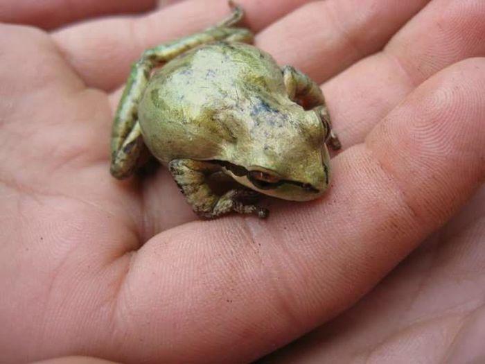 Frog Nature Vacation Camping Close-up I See Animals