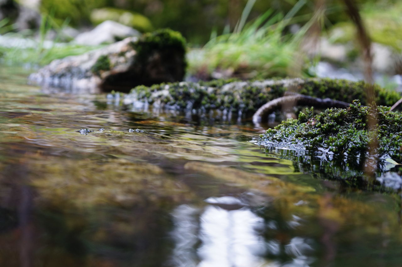 Surface Level Of Small Stream