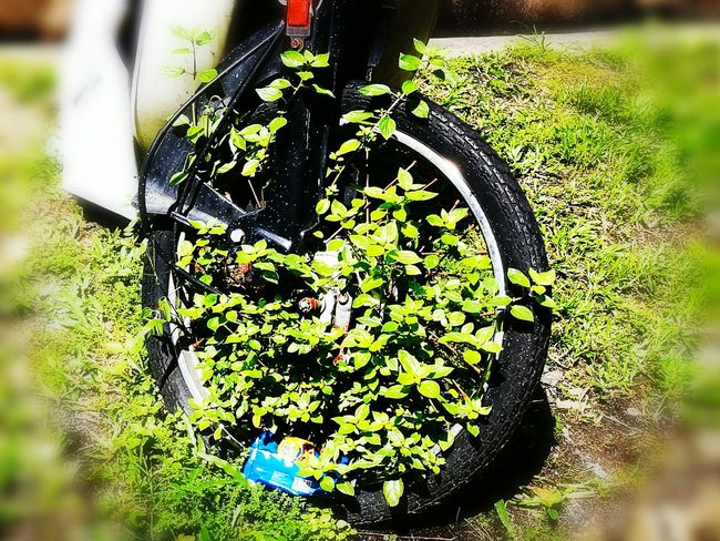Grass Growth Green Color Tranport