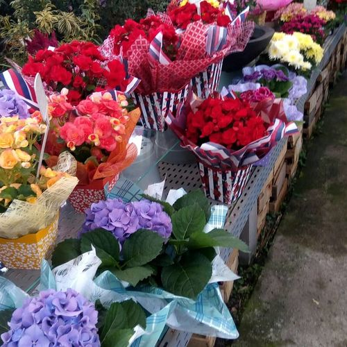 Floriculture Flower Retail  For Sale Variation Small Business Market Choice Freshness Day Flower Market High Angle View Abundance Outdoors No People Large Group Of Objects Business Finance And Industry Arrangement Flower Shop Nature Bouquet
