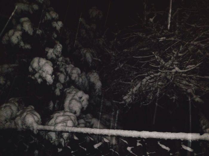 Winter Night Snow Cold