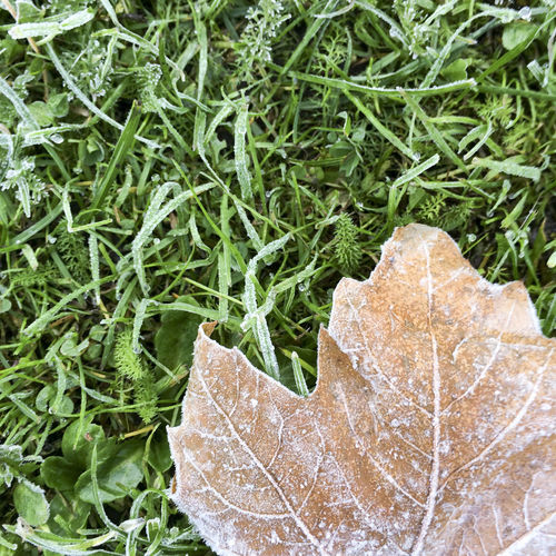 Autumn leaf on green grass with frost Abstract Autumn Autumn Colors Brittle Close-up Color Colour Dead Death Fall Fall Color Fall Leaf Frosted Frosty Grass Green Green Color Leaf Leaf Vein Leaves Life Cycle Natural Pattern No People