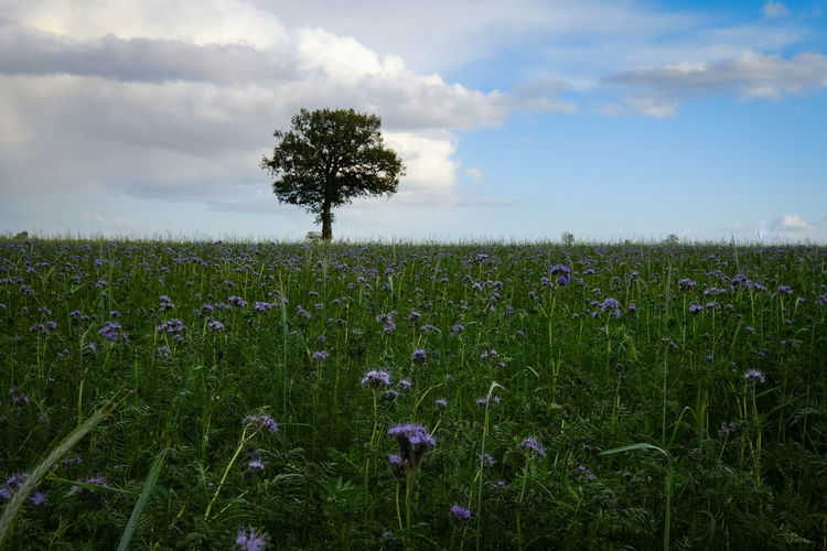 Agriculture Beauty In Nature Cloud - Sky Day Field Grass Growth Landscape Nature No People Outdoors Plant Rural Scene Scenics Sky Tranquil Scene Tranquility Tree