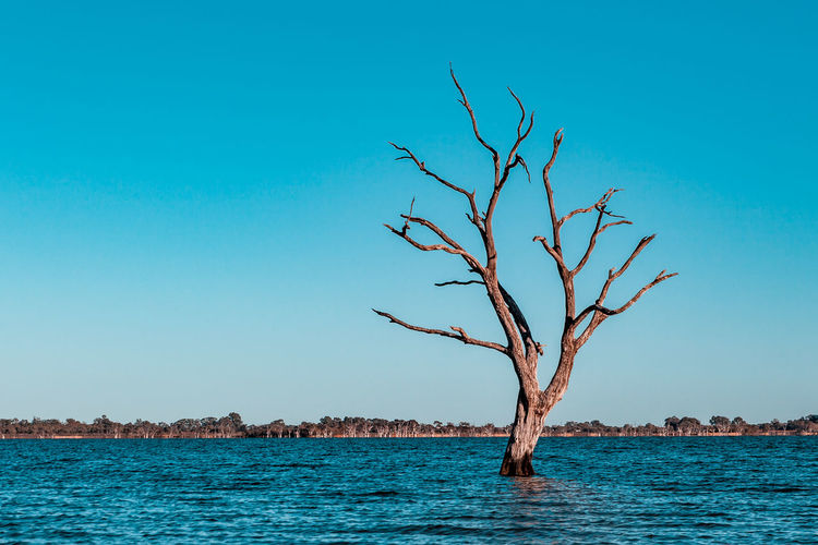 Dead tree in the water of Lake Bonney in Riverland, South Australia Australia Australian Landscape Dry Tree South Australia Travel Bare Tree Branch Copy Space Lake Lake Bonney Landscape Nature No People Tranquility Travel Destinations Water Waterfront