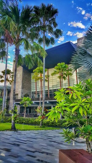 Palm Tree Building Exterior Architecture Tourist Resort Green Color Outdoors Green