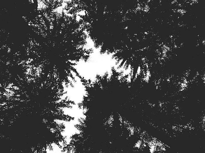 Trees TreePorn Tree Tree And Sky Blackandwhite Black And White Black & White Blackandwhite Photography EyeEm Best Shots - Black + White