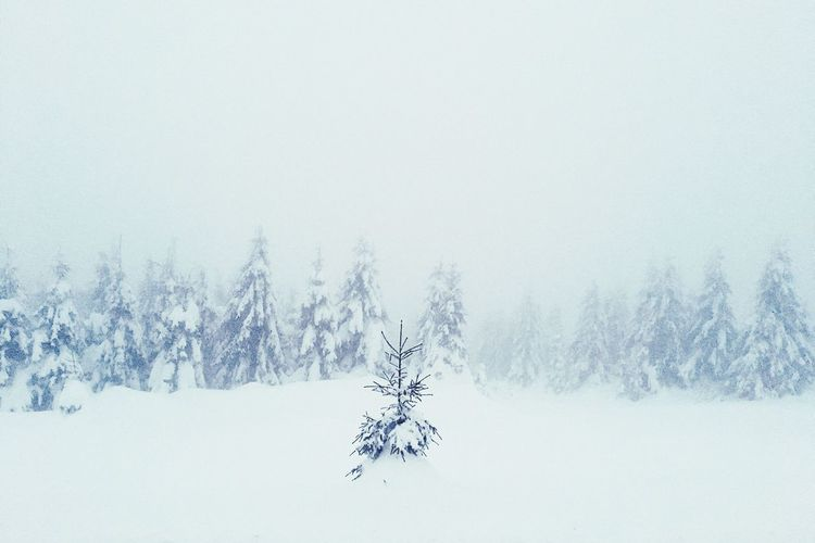 Winter Wonderland The Week On EyeEm Cold Temperature Winter Snow Weather Nature Tranquil Scene Tranquility Frozen Beauty In Nature Landscape Tree White Color Scenics No People Field Outdoors Day Fog Bare Tree Mountain