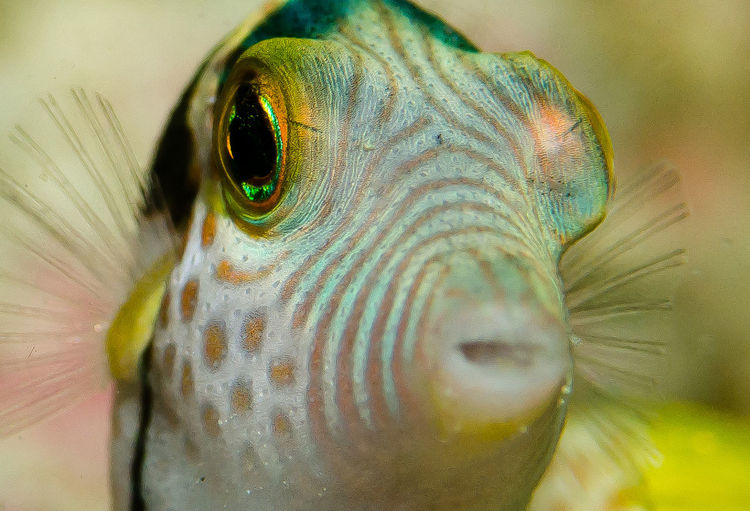 Love the patterns on this fish Animal Eye Close-up Fish Marine Life Multi Colored Ocean Patterns Stripes Pattern Underwater Underwater Photography