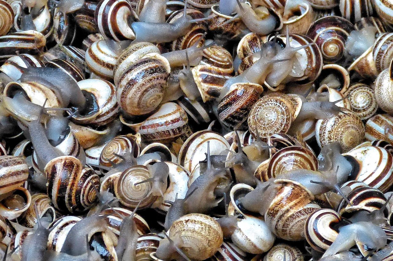 large group of objects, backgrounds, abundance, seafood, full frame, seashell, no people, large group of animals, collection, close-up, outdoors, day, animal themes