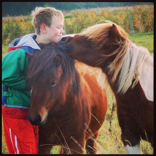 Knirps Ponys Besucht Fotos gemachtinstafunneffeinstadailyshetlandponysnikon