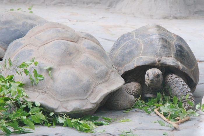 Turtle Zoo Animals Wildlife Hungry
