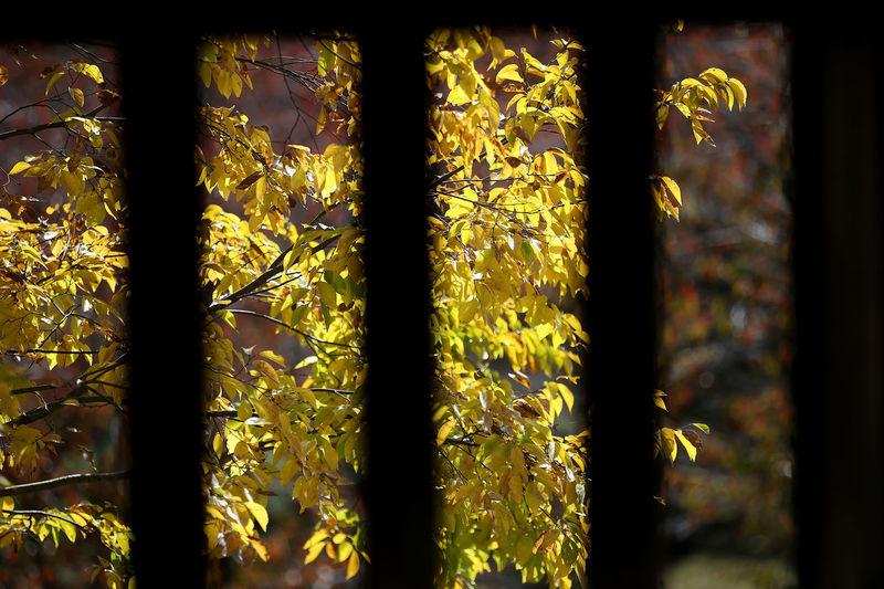 Close-up of yellow window