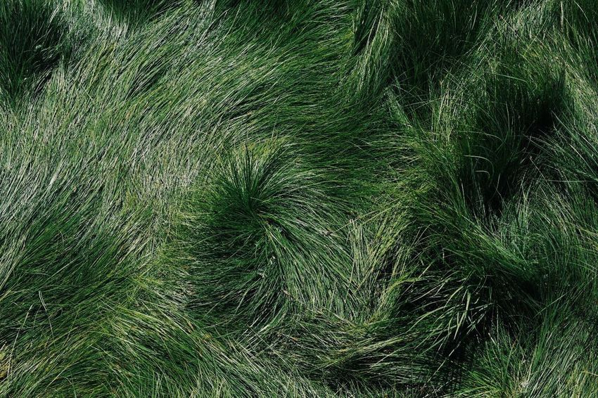 Grass Green Color Growth No People Nature Full Frame Backgrounds Grass Area Outdoors Day Plant Close-up