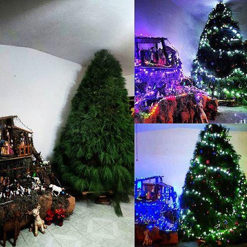 Y por fin quedó Galaxycamera Necrotismo_Photographer Christmastree Christmas Christmasisintheair Yahueleanavidad Navidad Encasa Diciembre Dicember