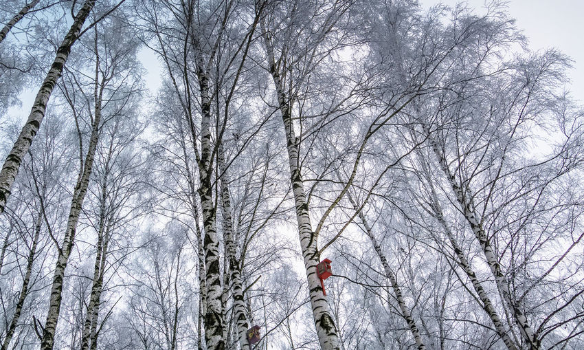 Frosted birch trees with nesting boxes, cold winter day in the park. Birch Nature Box Birdhouse Nest Tree Wooden Home Wildlife Bird Wood House Winter Branch Natural Season  Park Background Hole Garden Animal Small Forest Outdoor Snow Handmade Environment Care Cold Birds Shelter Trunk Nesting