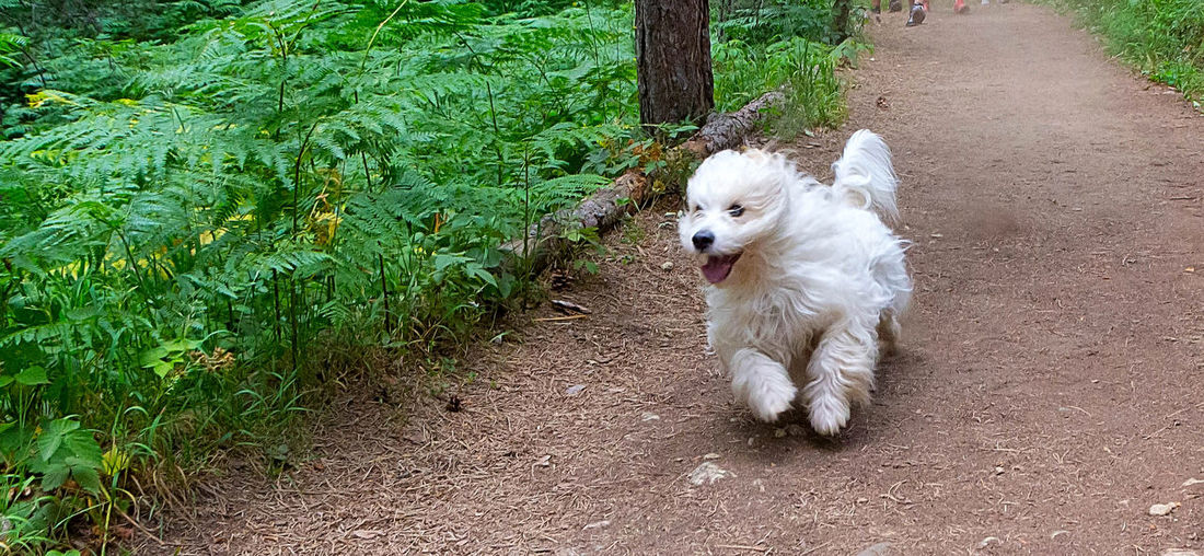 High angle view of white puppy on footpath