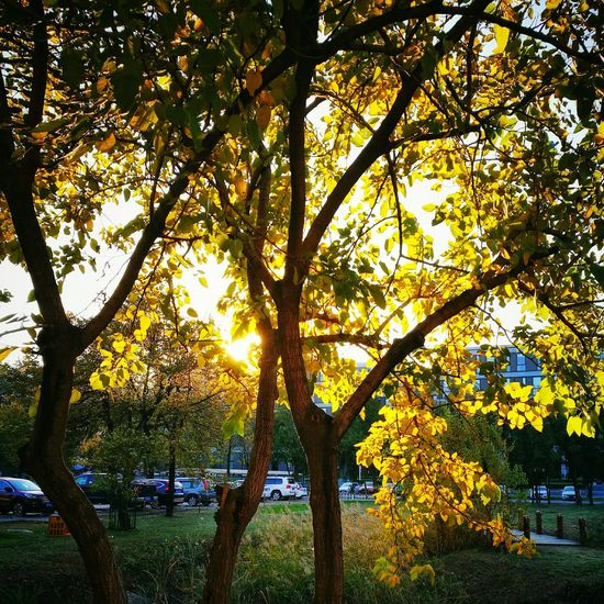 Tree Nature Sunlight No People Growth Beauty In Nature Outdoors Scenics Sky Light And Shadows Warm Glow Nature Abstract Colorfull Tranquil Scene Landscape Warm Colors Tranquility Enjoying The View Quiet Moments Tree Beauty In Nature Autumn Freshness Orange Color