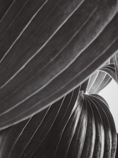 some kind of Lily Abstract EyeEm Nature Lover Black And White Vscocam