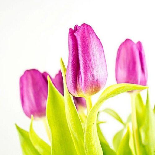 Nach Hause kommen und einen feinen Frühlingsgruß vorfinden .... für solche Überraschungen können doch nur weltbeste Mütter sorgen. DANKE! Momisalwaysthebest Thankyou Flower Tulips nature naturephotography blumen tulpen frühling spring pink