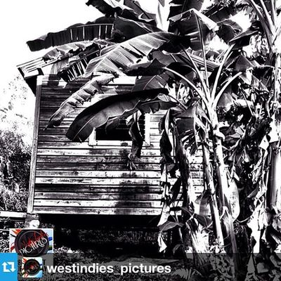 Repost from @westindies_pictures with @repostapp ✨🙏🙏🙏✨Thank You !!!! --- . ▪️ . SPOTLIGHT OF THE DAY .▪️ ✦✦✦✦✦✦✦✦✦✦✦✦✦✦✦✦✦✦✦ ➡️ Le : 13th MARCH 2014 ✦✦✦✦✦✦✦✦✦✦✦✦✦✦✦✦✦✦✦ 🏆 Photo by : @duppy__kankera 📍 Localisation : GRENADA 🔰 Select by @fwaiiztwoopiical ✦✦✦✦✦✦✦✦✦✦✦✦✦✦✦✦✦✦✦ 🔴🔴  OFFICIAL TAGS  🔴🔴 📷 Westindies_pictures 👥 Westindies_people 🏁 Westindies_bnw 🏯 Westindies_architecture 🌆 Westindies_landscape 🌅 Westindies_sunset 🍀 Westindies_nature 🎨 Westindies_colors ✦✦✦✦✦✦✦✦✦✦✦✦✦✦✦✦✦✦✦ 🔴 Tag suppléant : WestIndies ✦✦✦✦✦✦✦✦✦✦✦✦✦✦✦✦✦✦✦ 👏 CONGRATS & REPOST IT ! 🔄 ✦✦✦✦✦✦✦✦✦✦✦✦✦✦✦✦✦✦✦ ☆ Founder : @FwaiizTwoopiical ★ Admins : @Deedjii @Shayniz_l & @Auurelie_c_ ✦✦✦✦✦✦✦✦✦✦✦✦✦✦✦✦✦✦✦  Martinique  Guadeloupe  Islandlife  WestIndies  Westindies_pictures  Frenchwestindies  caribbean ⃣phototag_it ⃣shotaward ⃣caribbean ⃣picoftheday ⃣best_photogram