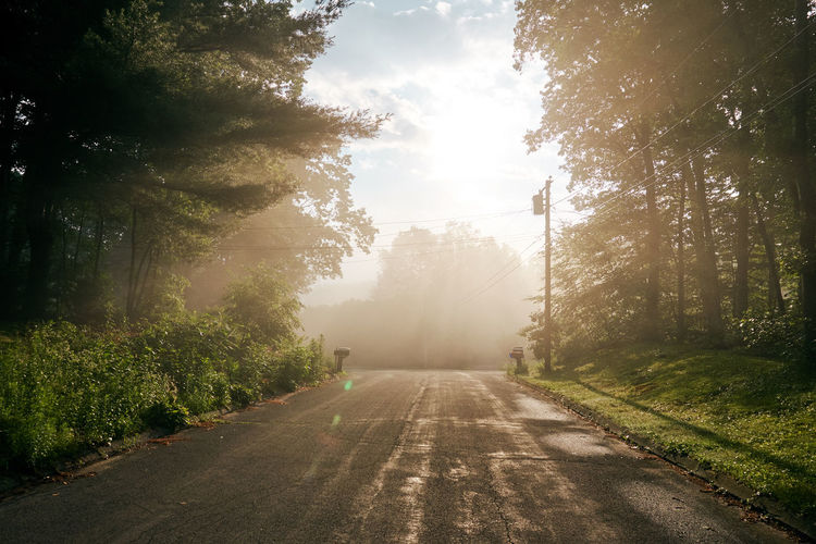 sunrise through a morning fog Beauty In Nature Foggy Morning Nature Road Sunbeam Sunlight Sunrise The Way Forward Tranquil Scene Tranquility