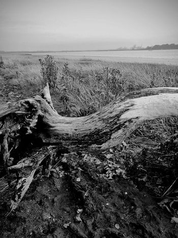 Beach Landscape Horizon Over Water No People Blackandwhite Photography Landscape Photography Deben River, Suffolk Driftwood Riverbank View River View Textures And Surfaces