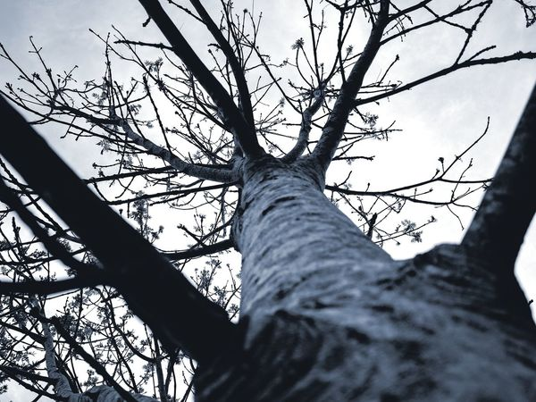 Tree Life Tree Tree Trunk Branch Nature Low Angle View Outdoors Day Beauty In Nature Tree Area Sky No People Kent Countryside Fragility Cloud - Sky Growth Looking Up Minimalistic Nice Touch Black And White Photography Monochrome Perspectives On Nature