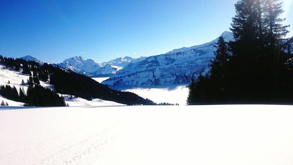 Skifahren bei Schönwetter. Skiing Snow Mountain Winter Cold Temperature Nature Scenics Mountain Range Day Outdoors Sky Tree Beauty In Nature