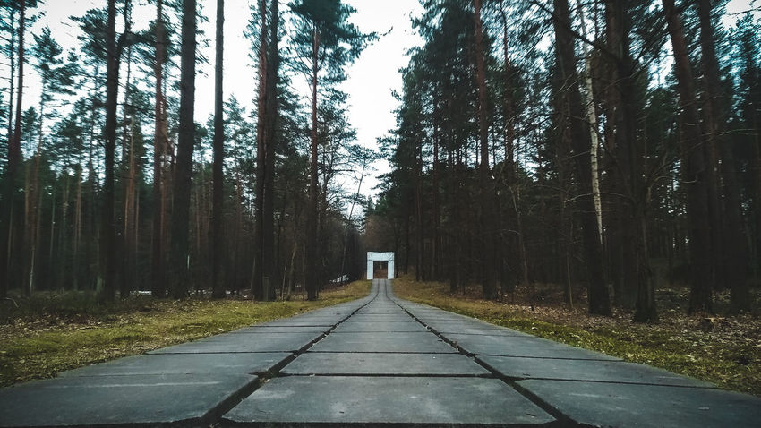 Riga Latvia Memorial City Forest Cloudy Day Cloudy Skies Nature Symetry Spring Moody Mood Captures Tree Forest Tree Trunk Sky Treelined The Way Forward Diminishing Perspective Walkway Pathway Empty Road Countryside Dirt Track