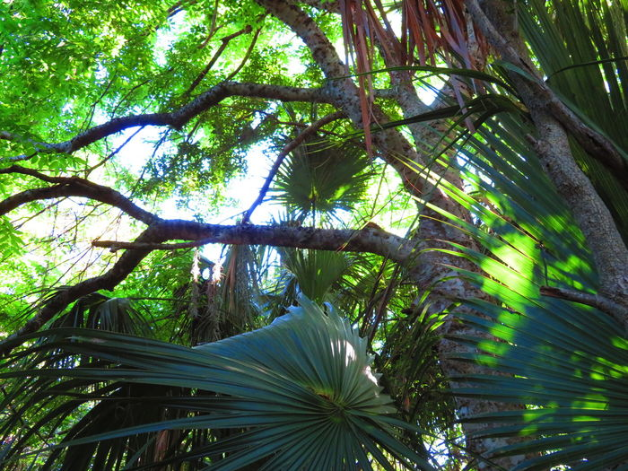 Tropical forest Tree Branch Forest Leaf Tree Trunk Sky Green Color Lush - Description Palm Leaf Lush Foliage Greenery Green Woods Tropical Tree Frond Tree Area