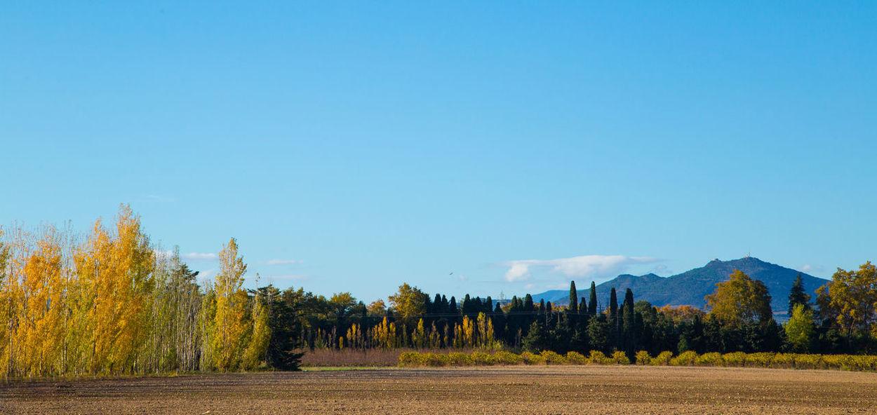 I love the autumn colours. Autumn Collection Autumn Foliage Blue Sky Colour Of Autumn Landscape_Collection Landscape_Collection Shades Of Nature Winter Is Round The Corner