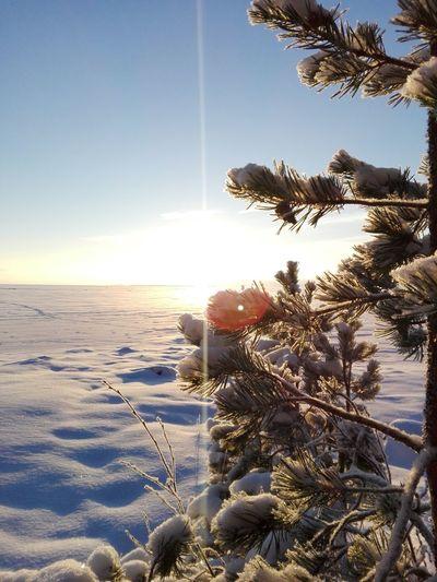 Beautiful sunrise Sunlight Nature Winter Day Weather Lake Photographer Photography Nature Photography Finnish Nature Landscape_photography Wintertime Winter Landscape Snow ❄ Winterwonderland Cold Temperature Outdoors Lake View Naturelovers