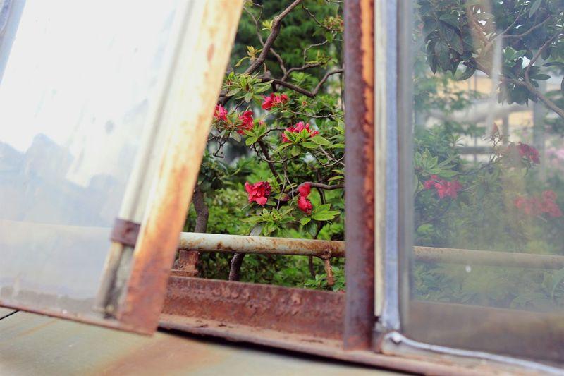 Saint Petersburg Botanical Garden Summer Flovers Nature On Your Doorstep