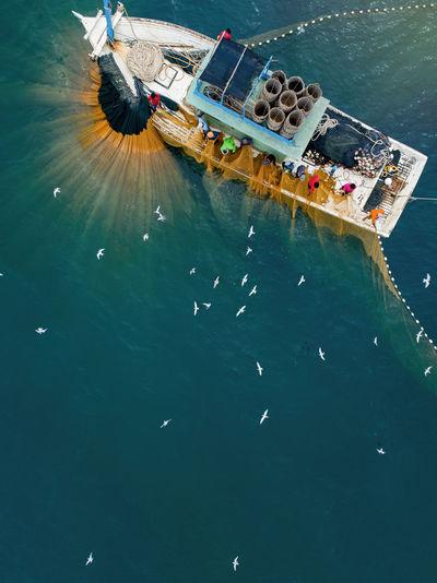 High angle view of seagulls on sea