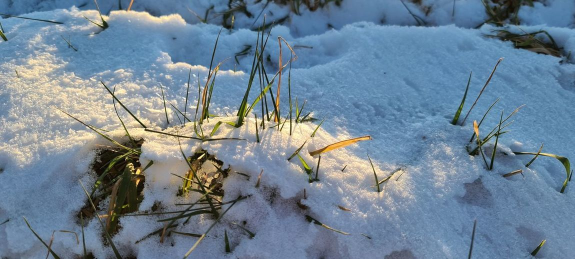 High angle view of snow covered plants on land