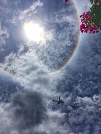 Sun Shiluette Afternoon Sunlight Sky Cloud - Sky Nature Beauty In Nature No People Day Flying Sunlight Outdoors Low Angle View Mid-air Scenics - Nature Plant Air Vehicle Airplane Sun Tranquility Lens Flare