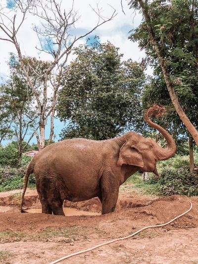 Elephant standing on land against trees