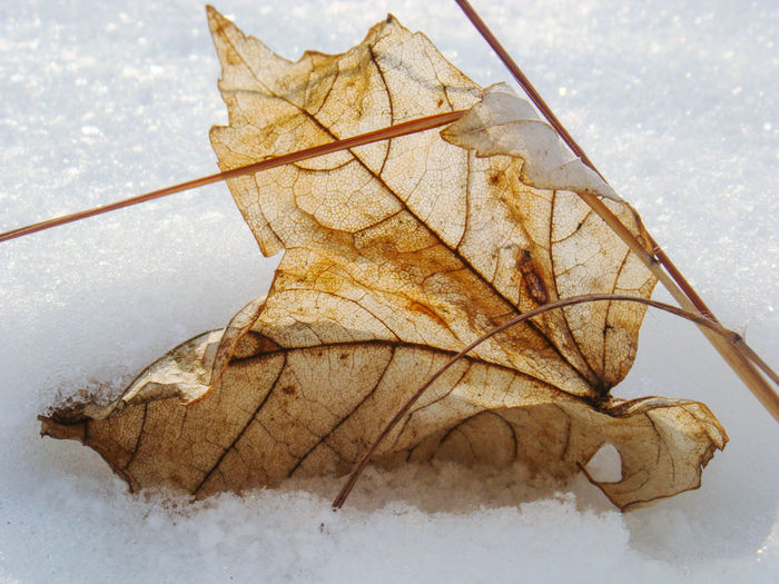 first snow Cold Composition Detail Dry First Snow Leaf Leaf Vein No People On The Snow